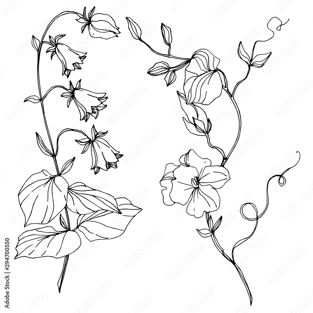 Fototapeta Vector Wildflowers floral botanical flowers. Black and white engraved ink art. Isolated flower illustration element.