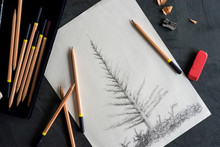 Pencil Sketch Of A Spruce Tree