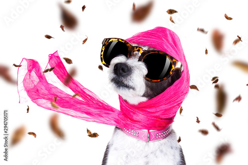 Tuinposter Crazy dog chic diva dog in autumn or fall windy