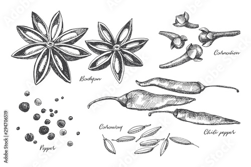 Fototapeta Hand drawn set of spices for cooking. Spicy spices: cloves, pepper, star anise and cardamom on a light isolated background. Organic food concept. Vector illustration. obraz