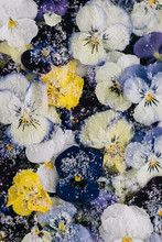 Pattern Of Colorful Candied White, Purple, Lilac And Yellow Pansies