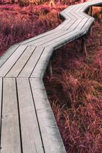 Boardwalk Leading To Marsh