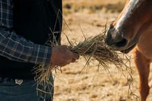 Rancher Feeding Hay Straw To Horse