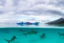 Kayak And A Shoal Of Sharks Un...