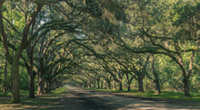 Wormsloe Oak Plantation, Savan...
