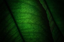 Details Of Green Leaves From A...