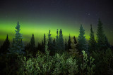 Aurora borealis and starry night sky over trees and forest, Labrador, Canada
