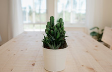 Potted Succulents On A Dinning Table