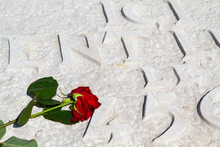A Rose Placed On The Graves Of...