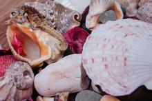 Various Sea Shells, Bits Of Gl...
