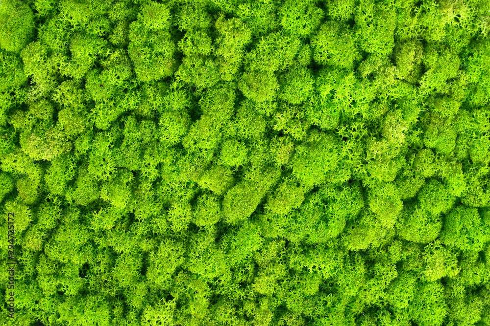 Fototapety, obrazy: Green decorative moss texture. Wall from moss background.