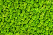 Green Decorative Moss Texture....