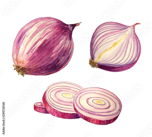 Fototapeta  Watercolor fresh onions
