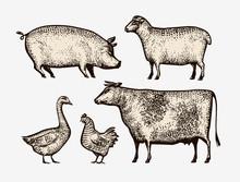 Farm Animals Hand-drawn. Sketc...