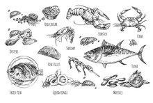 Healthy Seafood Natural Illust...
