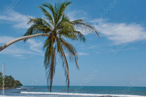 Costa Rican Caribbean Palm Tree Paradise Beach