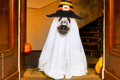 Keuken foto achterwand Crazy dog halloween ghost dog trick or treat