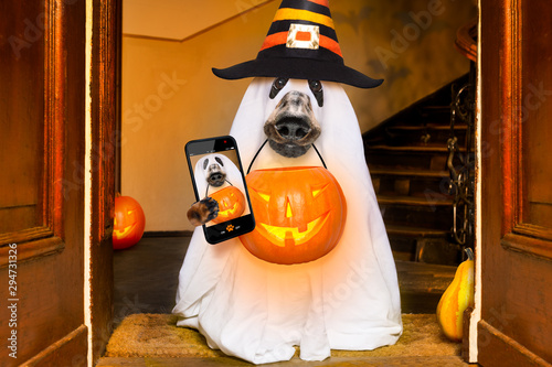 Wall Murals Crazy dog halloween ghost dog trick or treat
