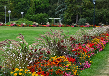 Colorful Flower Bed With Wild ...