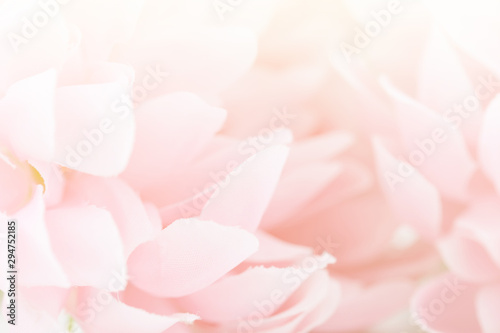 Poster Floral Beautiful pink flowers made with color filters, soft color and blur style for background