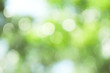 canvas print picture - Abstract green bokeh out of focus background from tree in nature