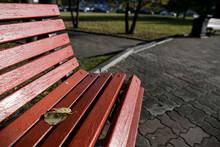 Park Bench In The Morning Light