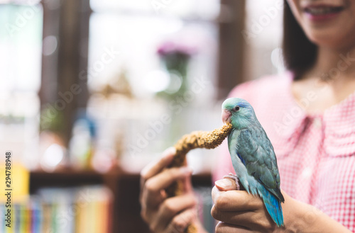 Spoed Fotobehang Vogel Blue tiny parrot bird playing friendly with adult woman at home.