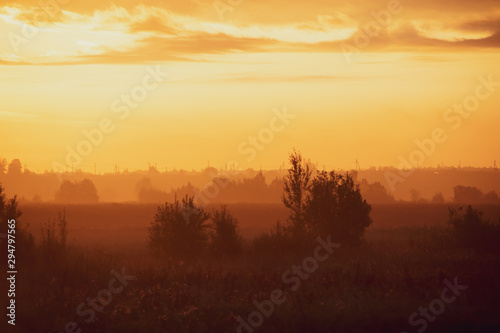 Foto auf AluDibond Braun Morning summer foggy dawn in the field. Summer landscape. The sun is waking up. The sky and the sun. Golden sky. The lights of a sun. Golden dawn.