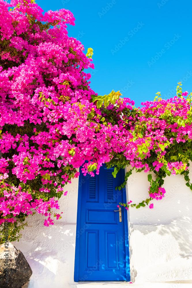 Fototapeta Traditional greek architecture and pink flowers on Santorini island, Greece.