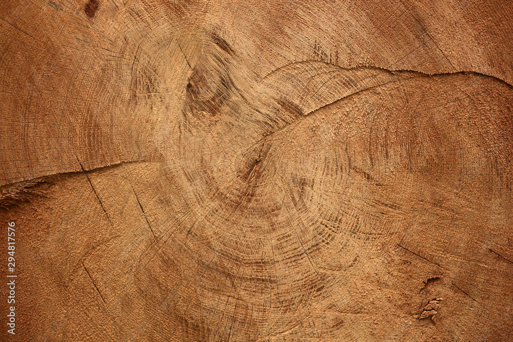 Fototapety, obrazy: Wood texture of cut tree trunk
