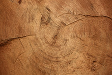 Wood Texture Of Cut Tree Trunk