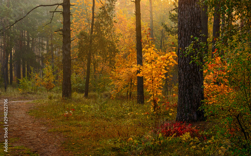 Route dans la forêt Autumn forest. Pleasant walk in the nature. Autumn painted trees with its magical colors.