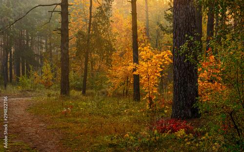 Photo sur Toile Route dans la forêt Autumn forest. Pleasant walk in the nature. Autumn painted trees with its magical colors.