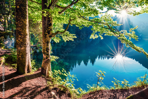 Fotobehang Bomen Stunning summer view of Fusine lake. First rays of the sun sparkle through the green leaves of the old forest. Splendid morning scene of Julian Alps, Province of Udine, Italy, Europe.