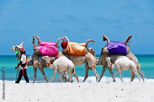 Obraz na plátne Tunisia. Djerba