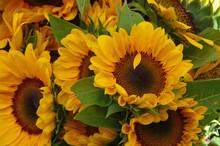 Sunflower Bunches Farmers Mark...