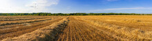Panorama Of Wheat Field Against Blue Sky On Summer Day