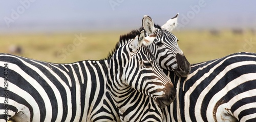 Two zebras standing together