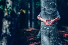 Woman Hand Embracing A Tree In...