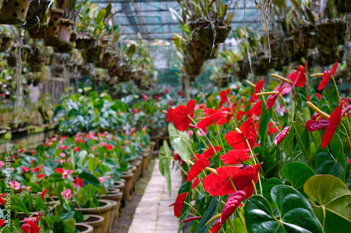 Fotografering  Flowers blooming at the botanic garden