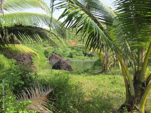 Pinturas sobre lienzo  Palm leaves