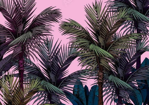 Obraz Tropical palm trees card on pink background. Hand drawn vector illustration. - fototapety do salonu
