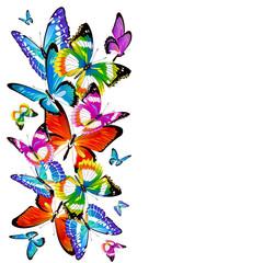 butterfly342
