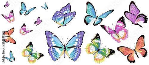 Fotografie, Obraz  butterfly341