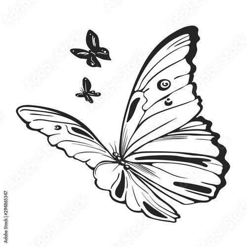 Photo sur Toile Papillons dans Grunge Butterflies black and white illustration