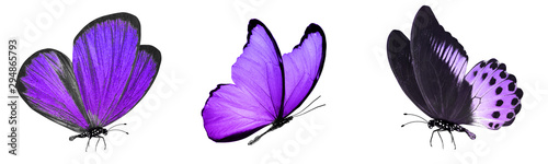 Fotografie, Obraz  tropical butterflies isolated on white.