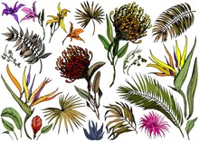 Collection Of Tropical Exotic ...