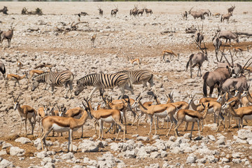 Large group of animals in Etosha national park, Africa.