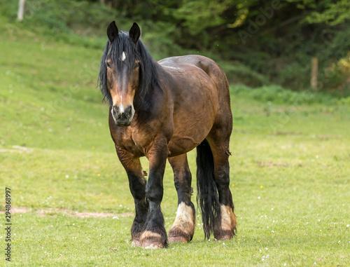 Photo Pferd