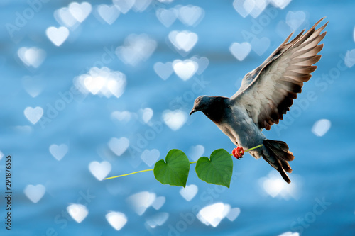Photo pigeons and heart shaped leaves, on the background of heart shaped bokeh